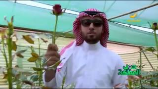 تبوك مدينة الورد.. زيارة لواحدة من أكبر مزارع الورد فيها
