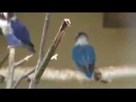 Лучник и фазан - YouTube