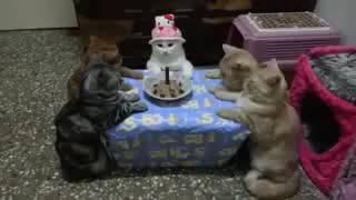 Top Video Kucing Merayakan Ulang Tahun [Happy Birthday]