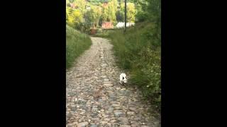 Собака поднимается на Гору Свободы в г. Плес