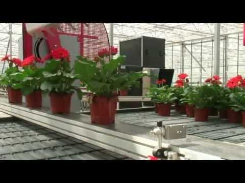 Гидрогель для комнатных растений. Полезные советы
