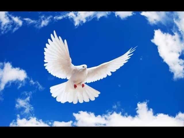 Gary Daniel - The White Dove