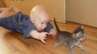Смешные картинки про кошек и котят Выпуск № 20 FUNNY CATS СМЕШНЫЕ КОШКИ