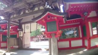 奈良県 石上神宮と霊木イチイガシと禁足地をゆく。