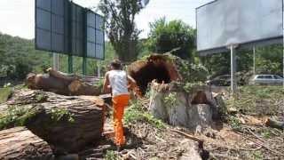 MVI 4058 cut(арбористика арборист спил удаление обрезка вырубка пилить спилить удалить рубить обрезать деревьев веток..., 2012-07-24T10:28:38.000Z)