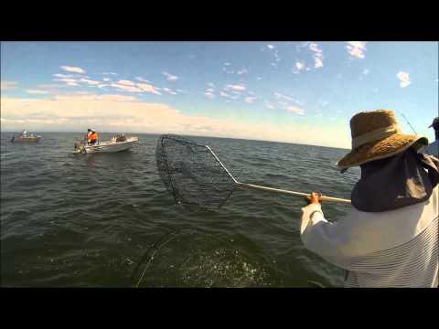Moreton Bay Mackerel 2014