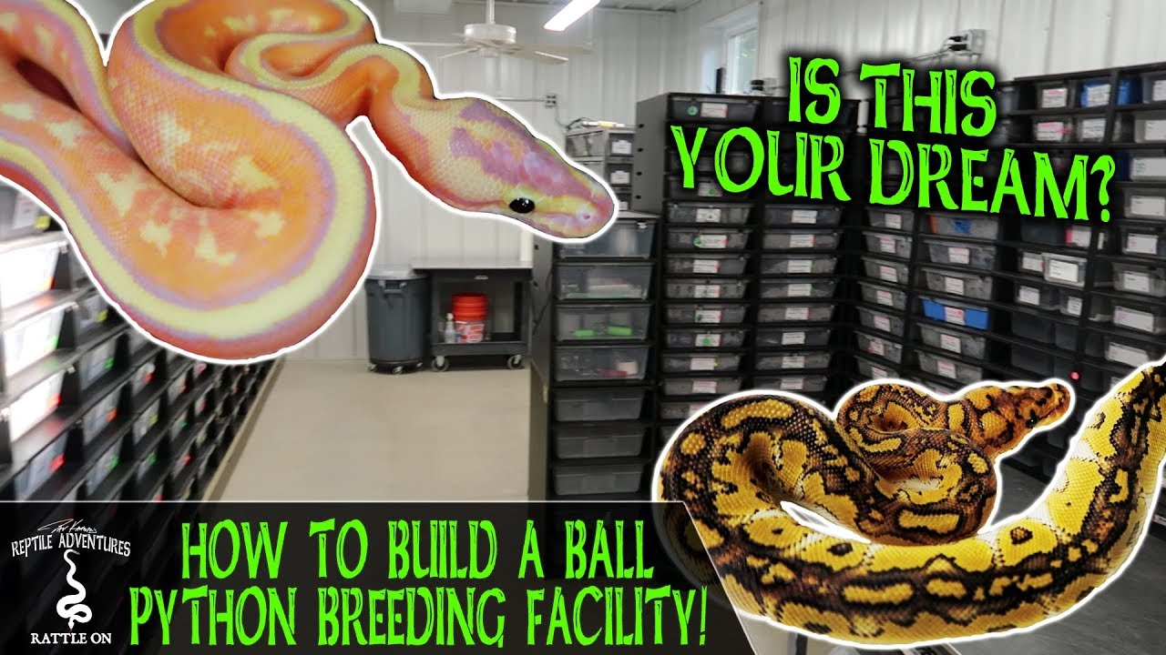 DRKA: How to Build a Ball Python Breeding Facility | The