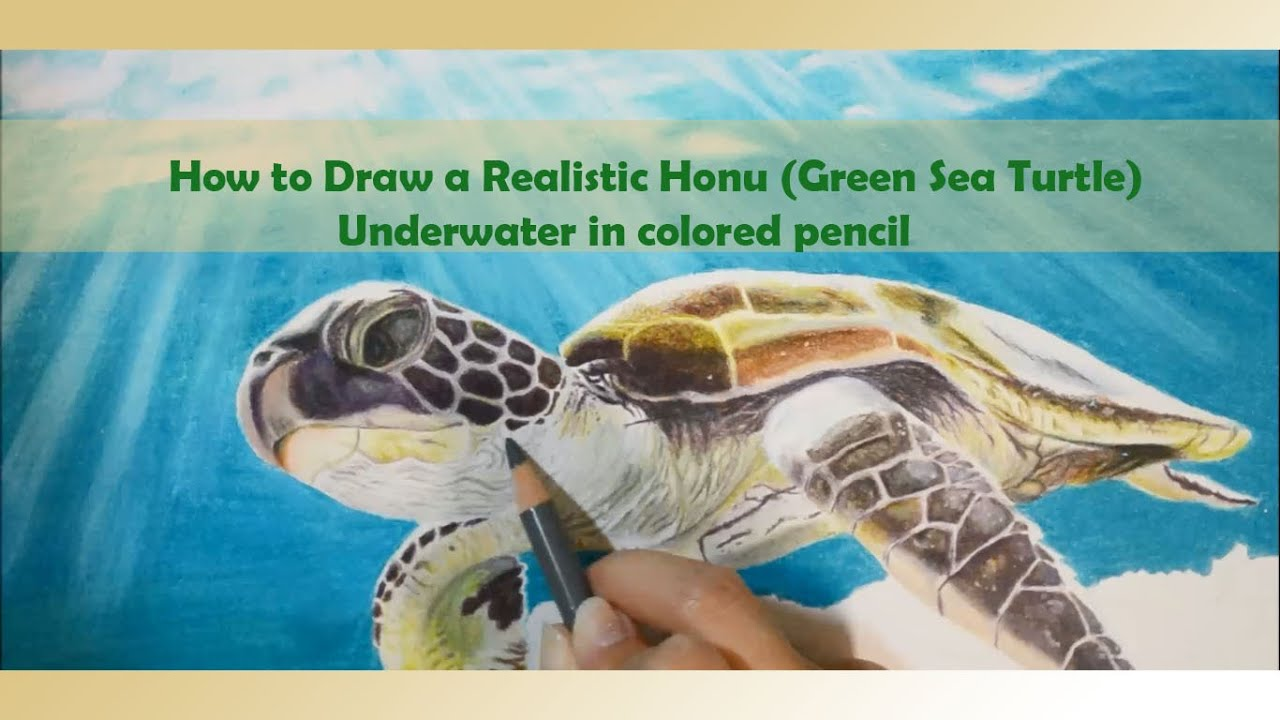 how to draw a realistic honu green sea turtle underwater in