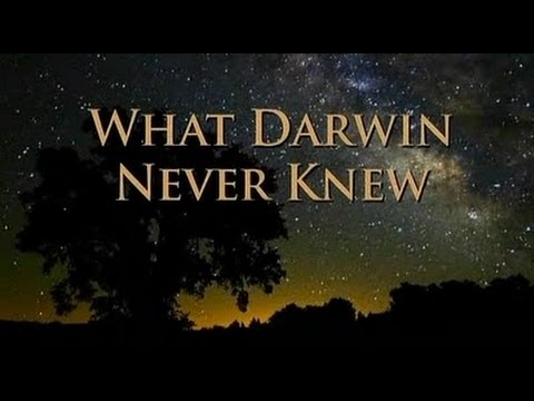 essay on what darwin never knew View notes - what darwin never knew (movie notes) from biol 1202 at louisiana state university what darwin never knew pbs air date: december 29, 2009 narrator: one.