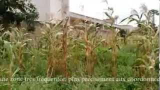 Immobilier au bénin | http://www.beninappart.com | vente-p 003