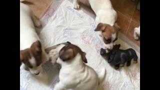 3  Клички щенков