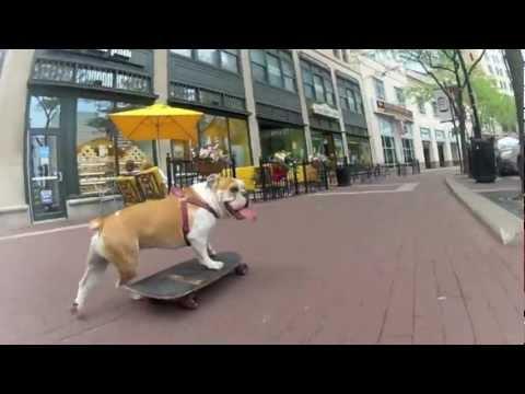 max the bulldog skating 3