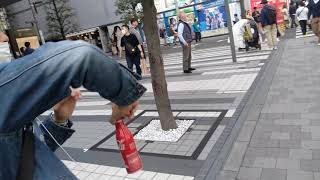 Đi Bộ Trên Bố Akihabara