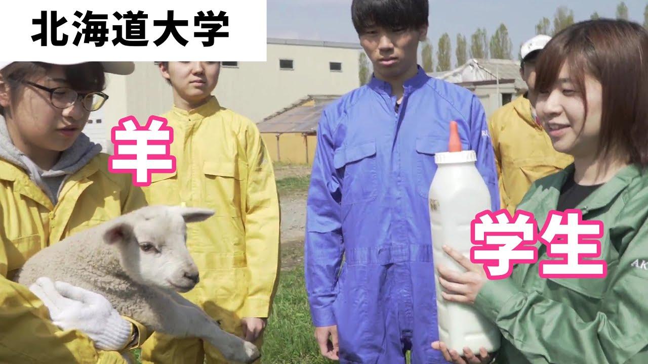 北海道大学農学部 実践的な畜産の授業の様子を特集