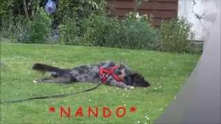 Nando Zucht Dringend Ein Zuhause!