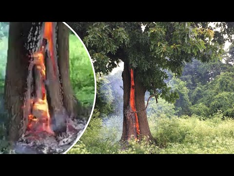 Tree catches fire after being struck by lightning; The biggest blaze in L.A. history - Compilation