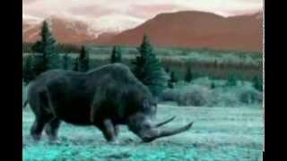 видео Австралопитеки: эволюция, образ жизни, особенности