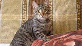 Кот Степан радуется приходу гостей!Смотреть со звуком!