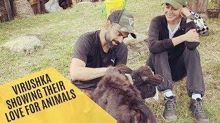 Animal Lovers Virat Kohli-Anushka Sharma Pet Calves In Bhutan | SpotboyE