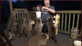 2020 06 12        Ten Raccoons