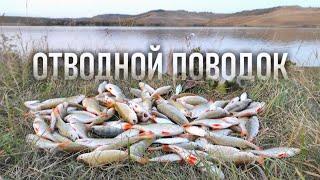 Окунь на отводной поводок с каждого заброса Осенняя рыбалка на водохранилище