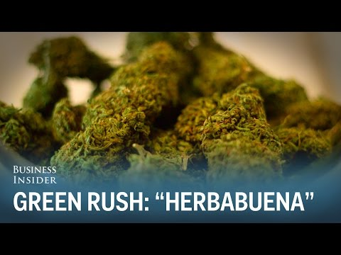 """The Cannabis Collective"" (Green Rush Episode 2)"