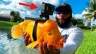 gopro-on-a-fish