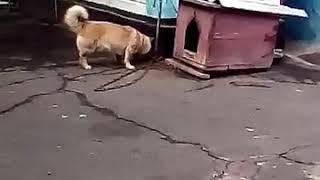 Собака закапывает хлеб😂 РЖУ нимагу!!! 😀