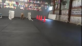 Allan Ross Dog Training
