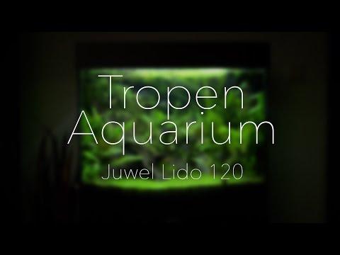 Juwel Lido 120 Amazonas Aquarium