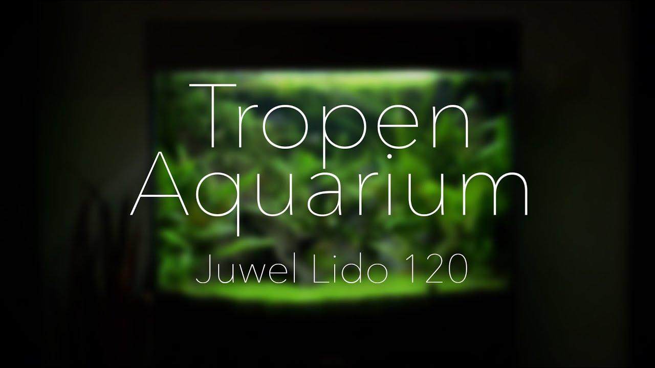 Juwel Lido 120 Amazonas Aquarium - YouTube