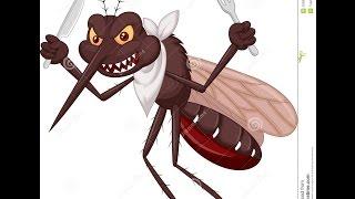 Zika, Dengue, Chikungunya - Metralhadora (Paródia) - Anne Karolynne