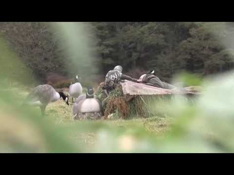 Off the Land Outdoors  Goose Hunting New Zealand