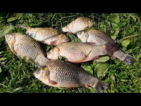тесто для ловли карася карпа и другой мирной рыбы