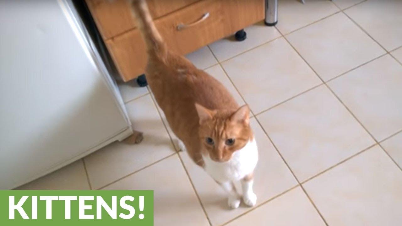 What It Means If You Cats Tail Shakes Like This Youtube