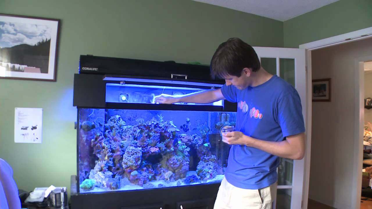 Cool Aquariums For Sale The Single Best Reef Tank Purchase Ive Ever Made Youtube