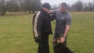 K9 Xena - Ultimate Personal Protection Dog