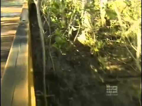 Environment - Nature Reserves and wildlife on the Gold Coast AU