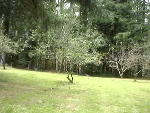 honda push mower mulching apple tree leaves youtube. Black Bedroom Furniture Sets. Home Design Ideas