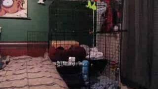 Bunny Condo