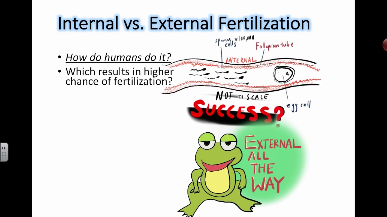 External Fertilization | www.pixshark.com - Images ...