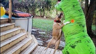 Pitbull Attacks T REX 😱😱😱!