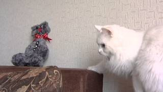 Добрай раніцы, Беларусь: Валяние из кошачьей шерсти (Елена Кулиева и кот Леонард)