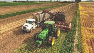 2018 SUGAR BEET HARVEST!! Michigan | Amity Harvester | #Farming