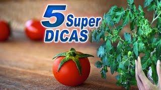 Super Dicas Para o Tomateiro Perfeito |Símples e Eficientes| thumbnail