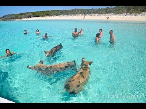 Animal Islands