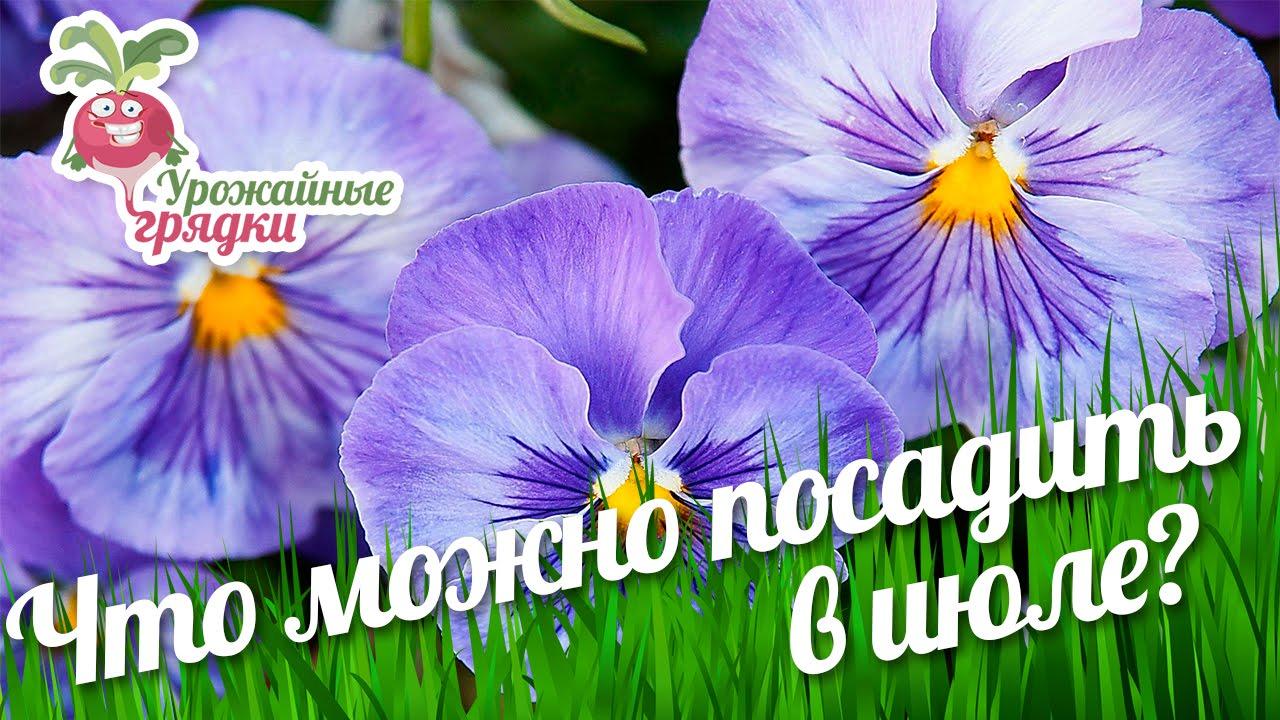 Какие цветы посадить в июле