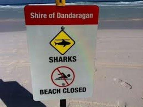 Shark Kills Surfer In Western Australia