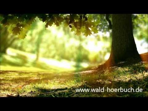 """Kraftortreise - Der Soundtrack zur Hörbuchreihe """"Wenn der Wald spricht..."""" (Hörprobe)"""