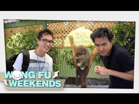 WFW - Australia Part 2! Kangaroos & Brisbane!